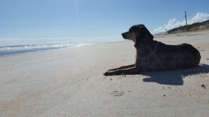 First Choice Florida Pet Friendly Vacation Rentals
