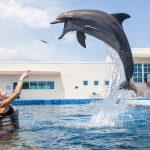 Marineland Dolphin Jumping